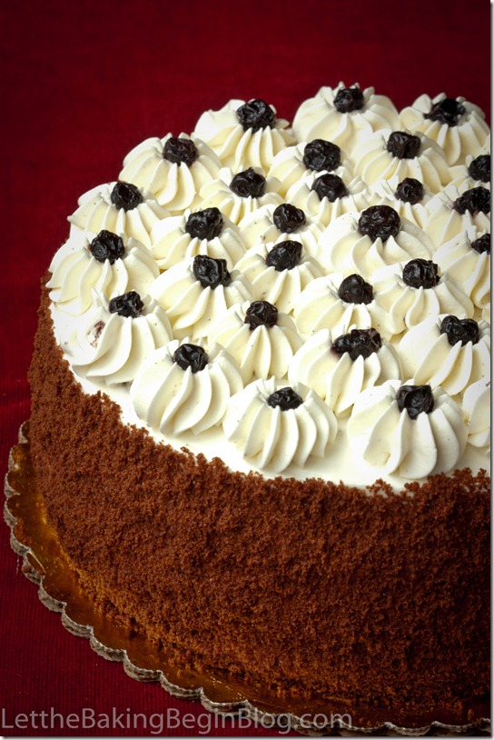 Moist chocolate cake topped with whipped cream and blackberries and shredded chocolate on the sides.