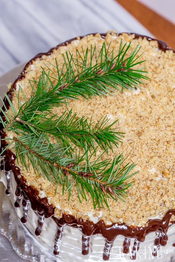 Top view of chocolate cake topped with dried walnuts and Christmas tree branches.