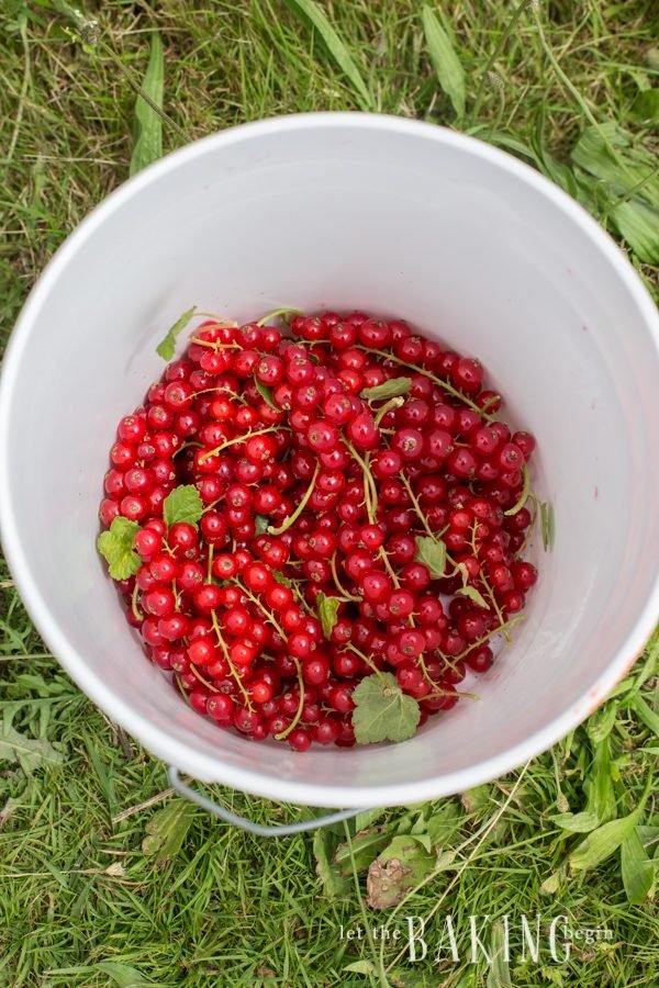 Red Currants  Let the Baking Begin